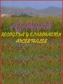 Azafrán. Recogida y elaboración ancestrales (2004)