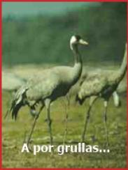 A por grullas, de Paloma Ferre (2009)
