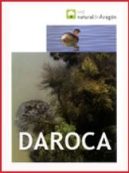 Campo de Daroca (2009)